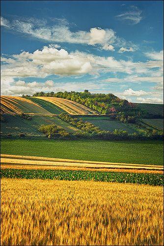 Serbian fields