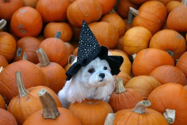 Dress up for Halloween pets